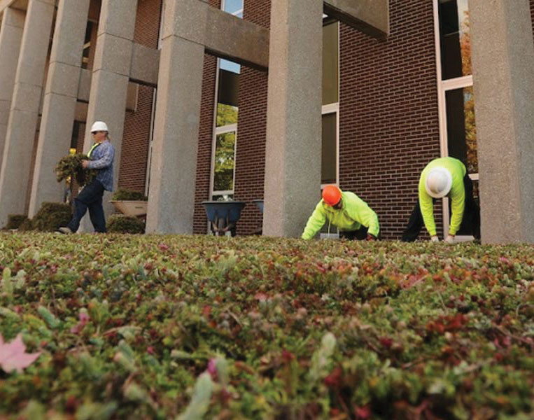 Workers tend green roof at Taylor Hall