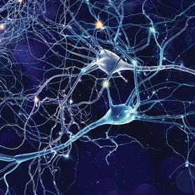 Brain Image - KSU Beyond the Brain