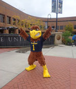 Flash the Golden Eagle