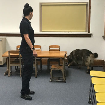 Kent State Officer Anne Spahr and Coco conduct a classroom search