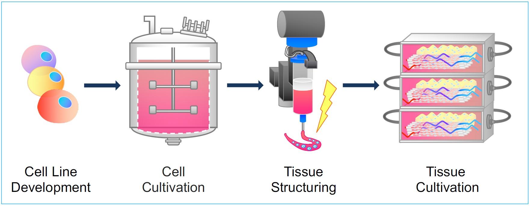 Krieger lab grown meat process flow diagram
