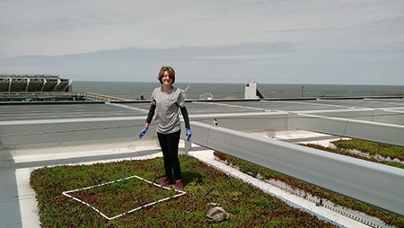 Kent State University doctoral student Anna Droz visits a green roof atop the Cuyahoga County Administrative Headquarters in Cleveland, Ohio as part of her research to find the most ecologically sound plant, soil and microbe combinations.