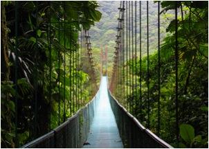 Image of a suspension bridge in Costa Rica