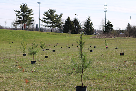 Pictured are trees that were planted at the site of Kent State's Climate Change Grove. The trees support research and the university's sustainability efforts.