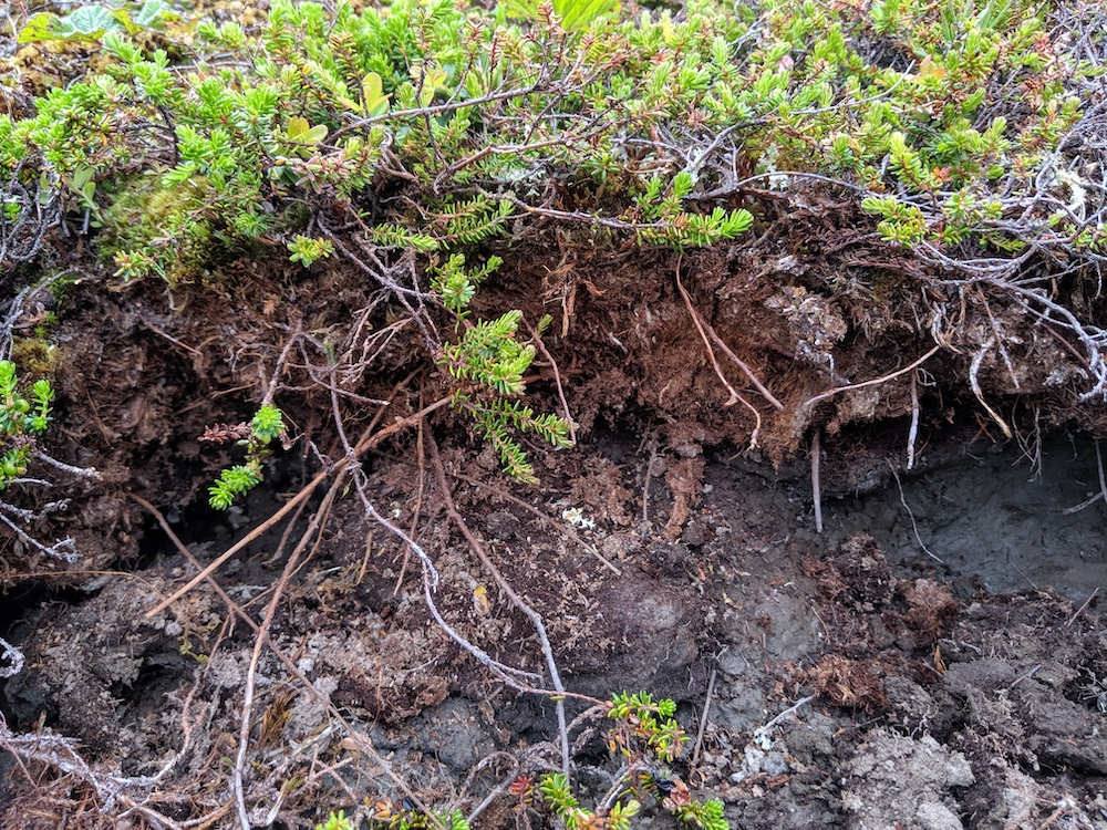 An image of collapsed permafrost soil, taken from a recent research trip to the arctic circle in Sweden.