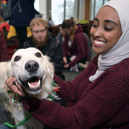 Dogs on Campus will visit during Kent State University Libraries Stress-Free Zone, open to all university students, faculty and staff, on Monday, Dec. 10 and Tuesday, Dec. 11.