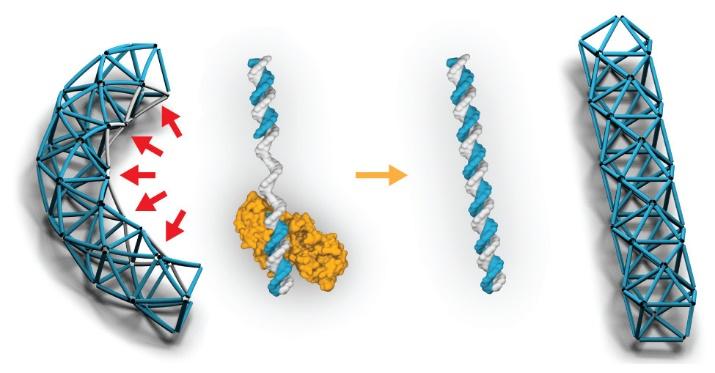 Gap filling Polymerase, DNA origami, Actuator, Agarwal, Schmidt et al ACS nano 2018