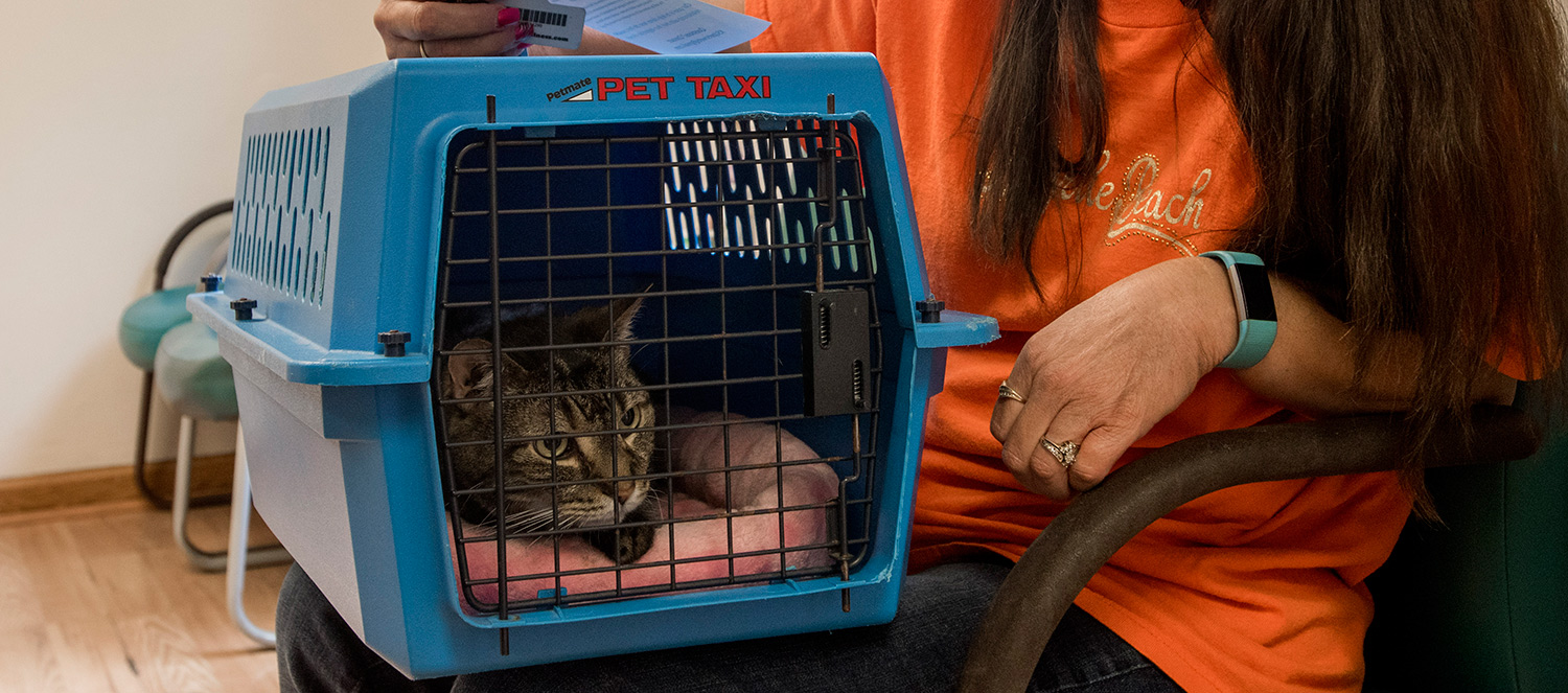 Cat in a car carrier at a veterinary clinic