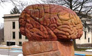 Giant Brain red sandstone sculpture standing (appropriately) behind Lowry Hall, home of the Department of Anthropology.