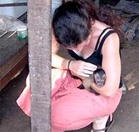 Graduate student befriends a capuchin monkey in Suriname