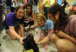 Pet therapy dogs help Kent State University students relieve the stress of finals week during University Libraries' Stress-Free Zone event. The Stress-Free Zone returns Dec. 9 and 10.