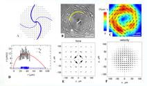 Unipolar circular flow of bacteria around a spiraling vortex