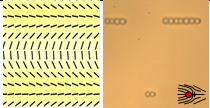 Left: Predesigned nematic cell; rods show the local direction of molecular orientation. Top and bottom regions exhibit splay deformations; the central part shows bend. Right: small colloidal particles of diameter 5 microns assemble into linear chains