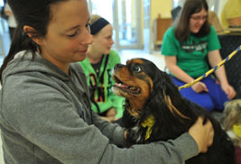 Pet therapy dogs will be available at University Libraries' Stress-Free Zone event to ease the stress of finals week for students, faculty and staff.