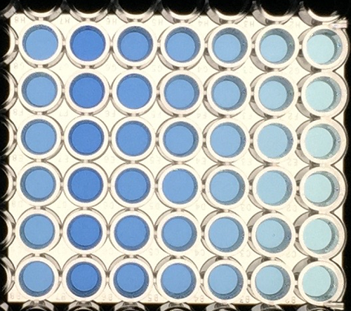 Experimental samples photographed in a standard 96-well plate.