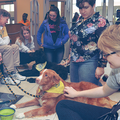 Students petting therapy dogs