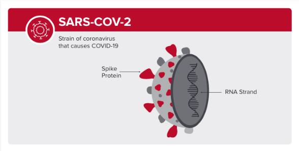 SARS-COV-2 image of strain of coronavirus that causes COVID-19, illustrating the spike protein and RNA strand.