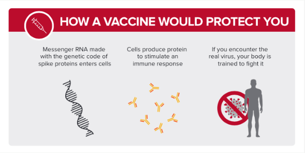 How a vaccine would protect you. Messenger RNA made with genetic code of spike proteins enter the cells. Cells produce protein to stimulate an immune system response. If you encounter the real virus, your body is trained to fight it.