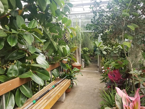 Herrick Conservatory Greenhouse
