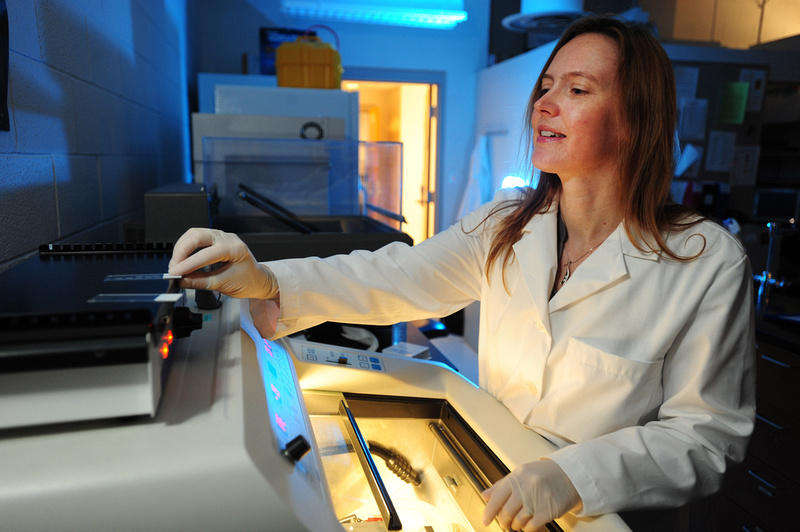 Kent State Biologist, Dr. Heather Caldwell, works in her lab.