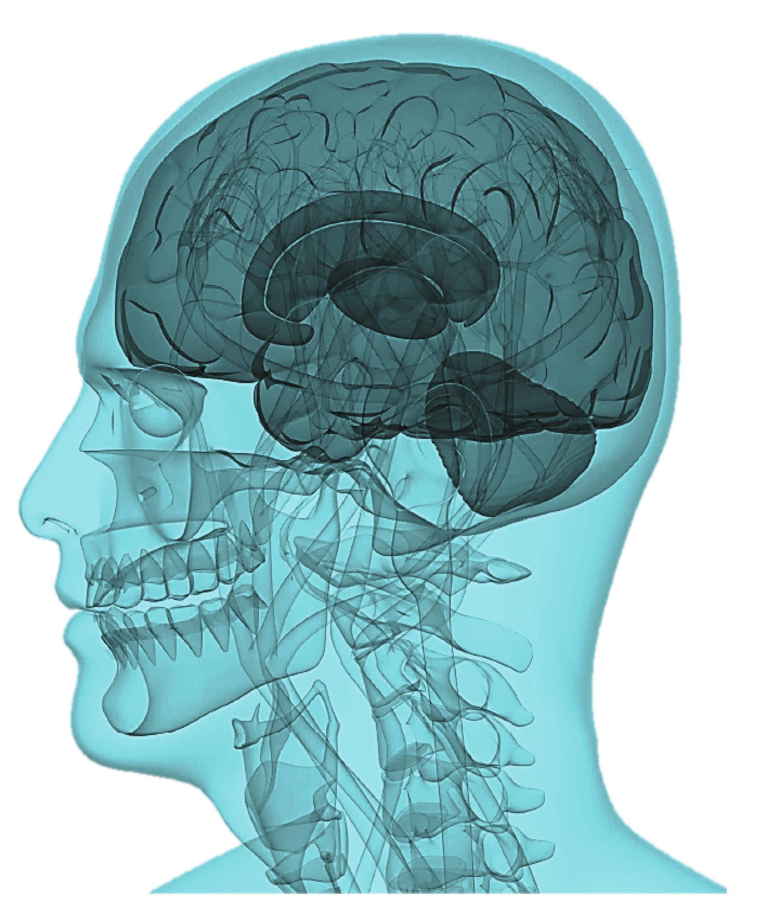 Brain Head Health