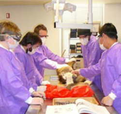 Graduate students enhance their learning of the musculoskeletal system by dissecting nonhuman primate cadavers.