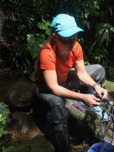 Emmaleigh Given sitting along the stream bank untangling ropes attached to temperature and light sensors.