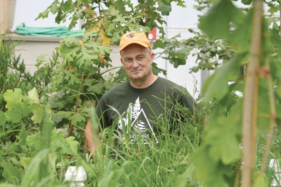 David Ward, professor of Plant Biology