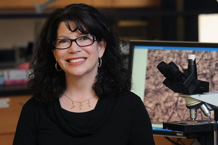 Mary Ann Raghanti, Ph.D., compared neurochemical profiles in the striatum, a brain region that modulates social behavior, among humans, chimpanzees, gorillas, and monkeys and found a unique profile in humans.