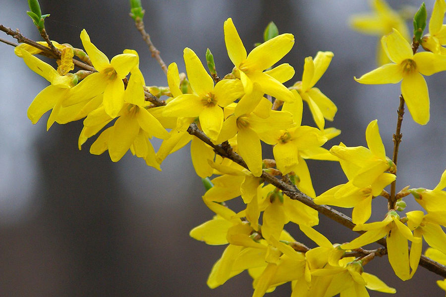 Flowering tree branch