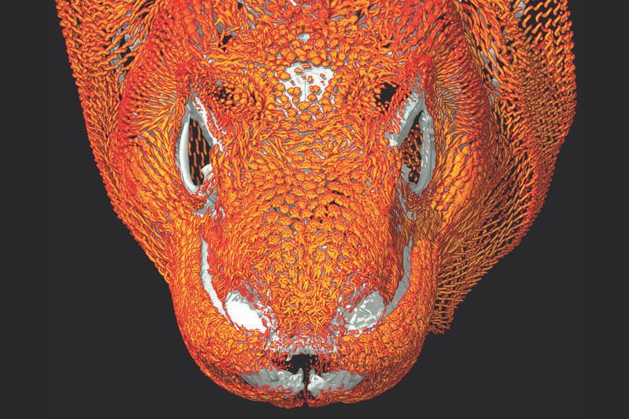 CT Scan Rendering of a Komodo Dragon Head