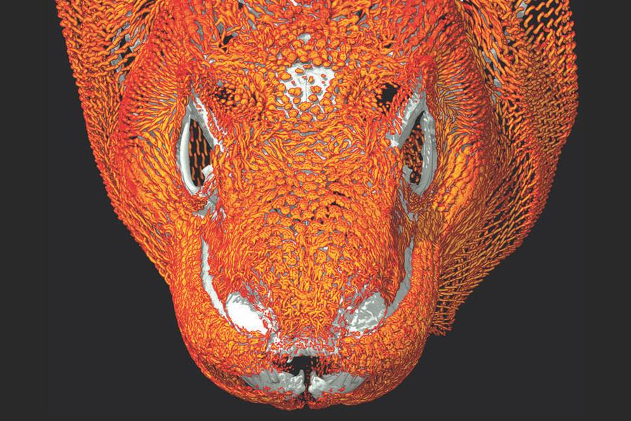 CT Scan Rendering of a Komodo Dragon Head