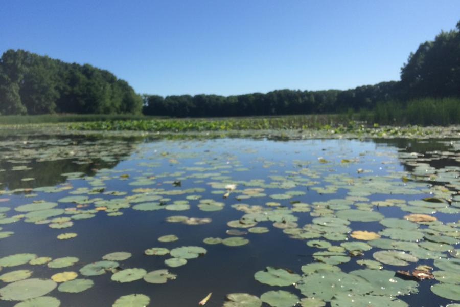 Old Woman Creek: one of the wetlands that is part of H2Ohio Initiative Wetland Monitoring Program. Researchers will assess how effective wetland restoration, construction, and management projects are at removing polluting nutrients from inflowing water.