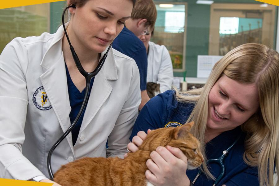 Veterinary Technology Students at the Trumbull Campus