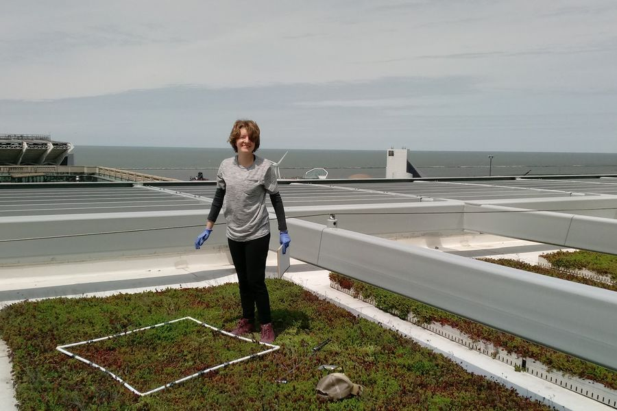 Kent State doctoral student Anna Droz researches how to improve green roofs by planting experimental gardens in Cleveland, Ohio.