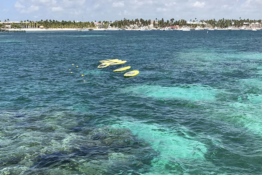 "Cassie Gallagher, giving specialist for Kent State University Foundation, traveled to Punta Cana for her honeymoon. This picture was taken when they went snorkeling. They swam with sting rays and nurse sharks. ""The water was beautiful!"" she says."