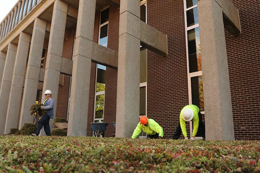 Workers install a green roof onto the lower roof of Taylor Hall at Kent State University. The plants help insulate the building, control water runoff and provide less glare.