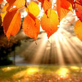 Thanksgiving Break: Nov. 22-25