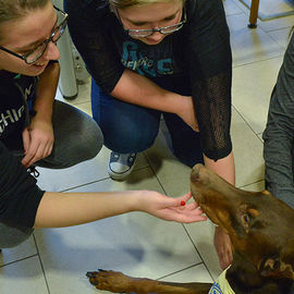 Students surrounding a therapy dog