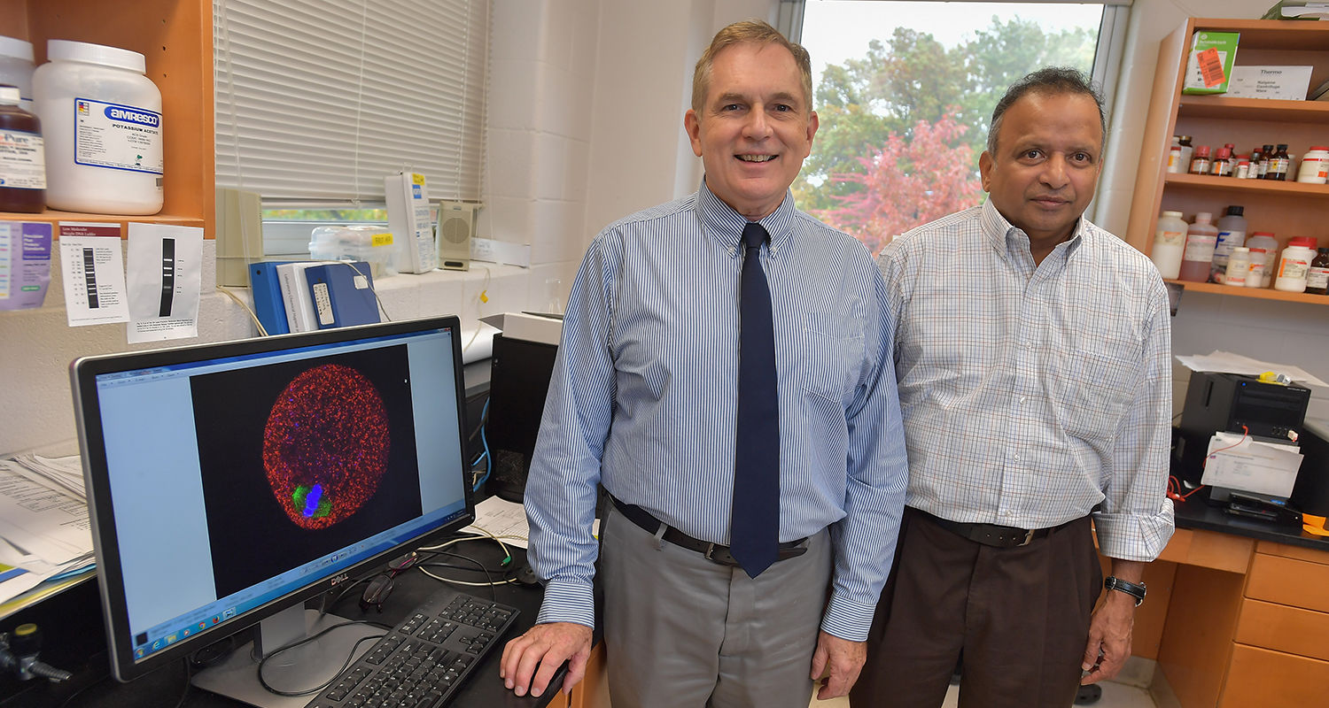 Doug Kline (left) and Srinivasan Vijayaraghavan (right), both professors in Kent State University's Department of Biological Sciences, have received NIH grants to study reproductive challenges.