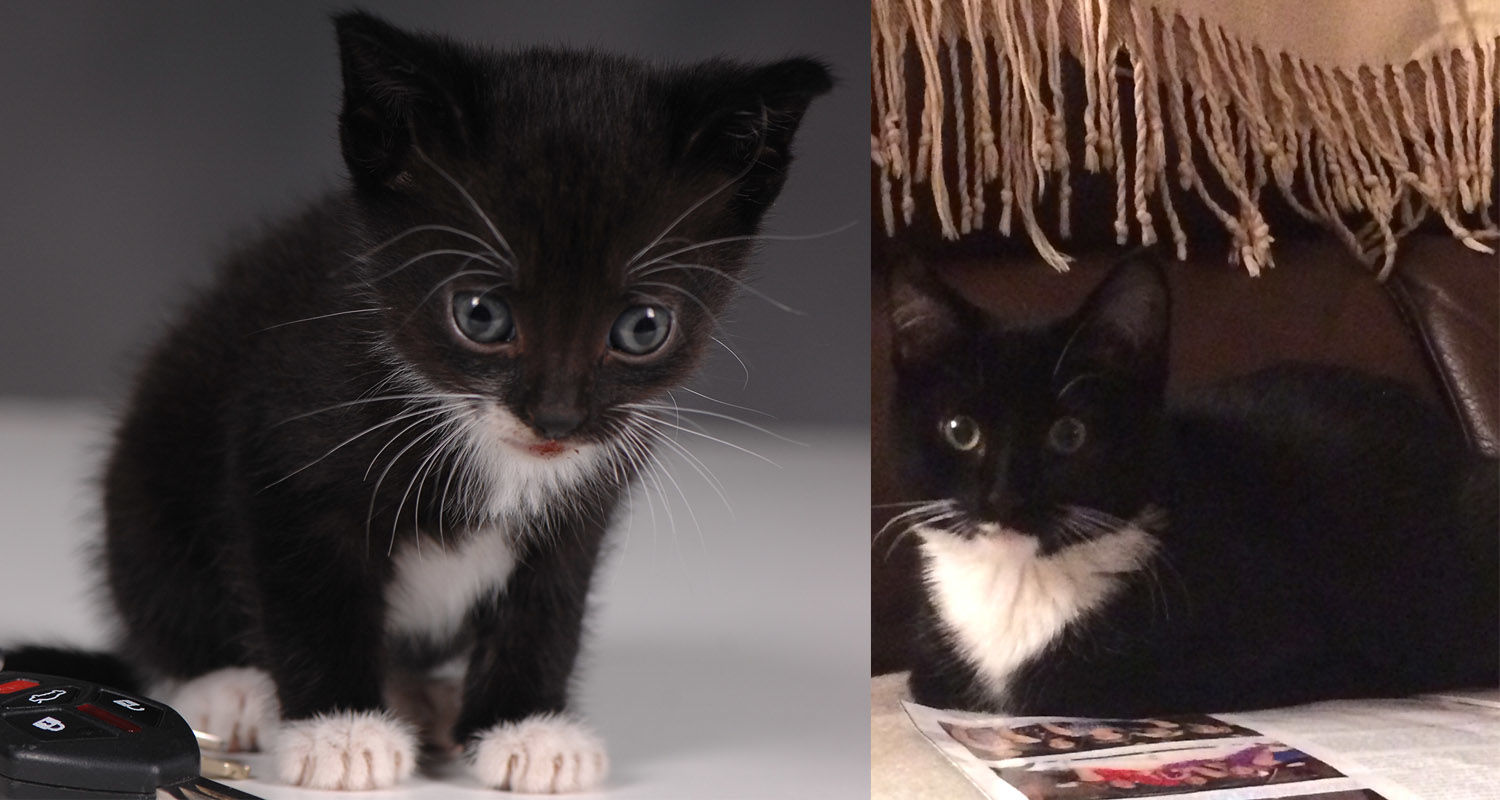 Two stray kittens were rescued by Kent State employees.