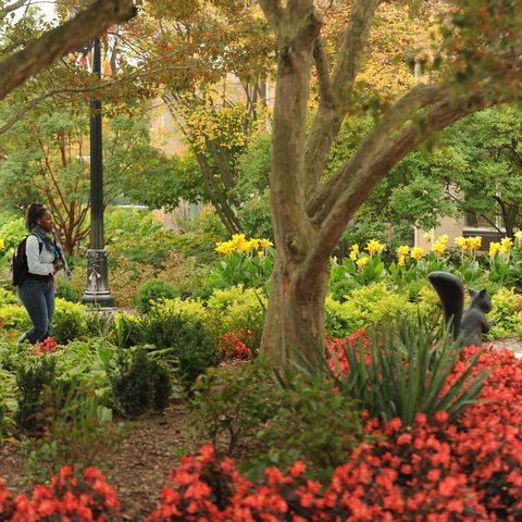 A student walking on campus among flowers and trees on a fall day.