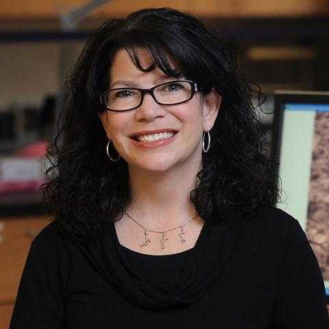 Mary Ann Raghanti, Ph.D., compared neurochemical profiles in the striatum, a brain region that modulates social behavior, among humans, chimpanzees, gorillas, and monkeys and found a unique profile in humans.