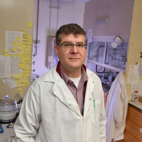 Torsten Hegmann, Ph.D., a chemical physics professor and Ohio Research Scholar in Kent State University's Liquid Crystal Institute®, has been named a Fellow of the Royal Society of Chemistry, one of the top publishing societies in chemistry worldwide.