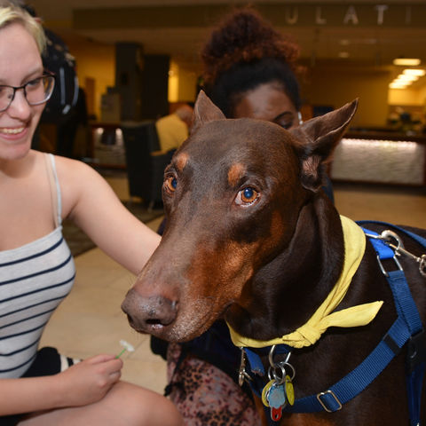 Luke, a Doberman pinscher, enjoys the attention he receives from a student during the Stress-Free Zone event in the library.
