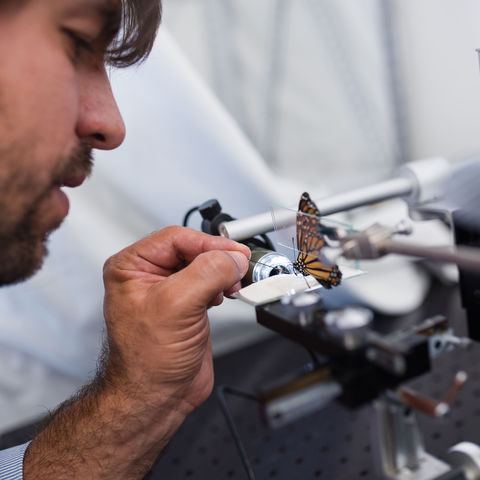 PBS to highlight Kent State Stark professor's research on how butterflies could help serve as a model to deliver medicine to humans.