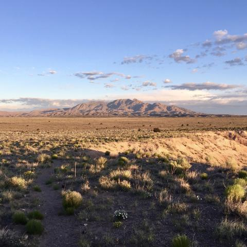 Picture of Chihuahuan Desert landscape