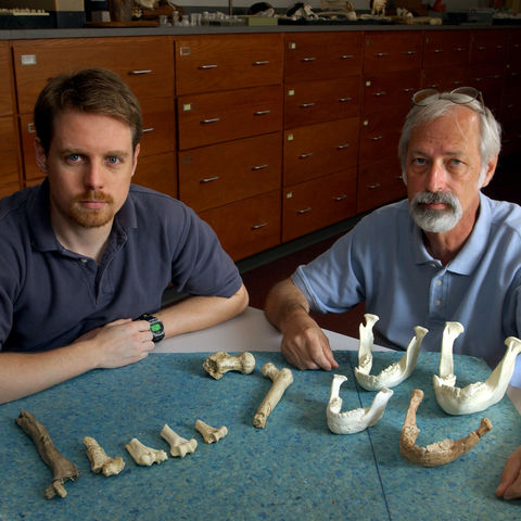 Phd.student Phil Reno and Professor Owen Lovejoy pose with some material used for Reno's recent research into the monogamy in early humanids. Included are the bones from Lucy and other specimens.