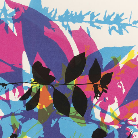 Case and McMahon's print, depicting overlapping plants in blue, pink, purple, orange, yellow and black, on a white background.