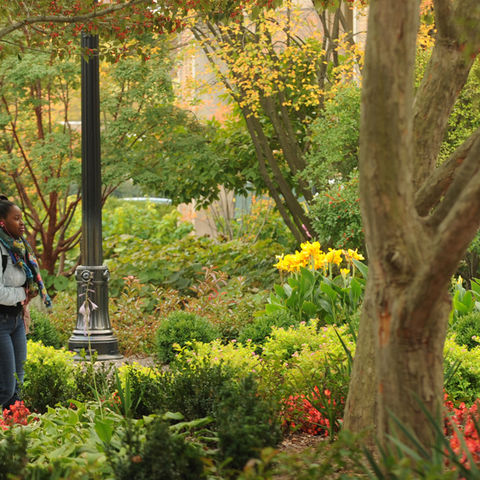 Student walking through trees and flowers on campus